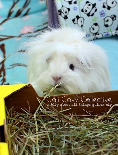 Abby-Roo Hay Box