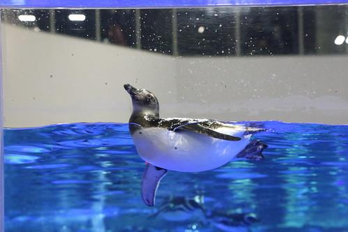 sumida_aquarium11