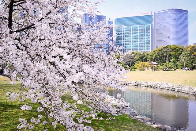Tokyo City Sakurascape