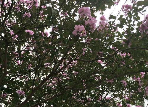 looks like blossom