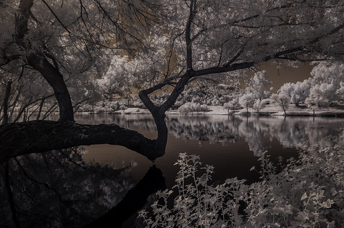 lindolake lindolake2 ir infrared infraredphotography convertedinfraredcamera reflections trees foliage water sky lakeside nature naturalbeauty surreal composition infrarouge
