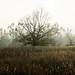 . : the tree : .