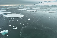 Ice in Lallemand Fjord