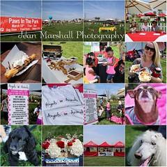 #paws #pawsinthepark #oxnardfoodie #canon #eventphotographer #iephotographer #dogs #foodtruck #churros @myworldonaplate #bestchef @emilykateevents #besteventplanner @brookfieldsocal #besthomes
