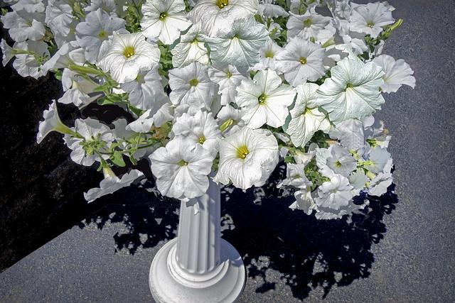 White Petunias - Walmart
