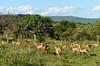 Rhino River Lodge - the bush