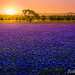 Spring in Texas by s_datta2007