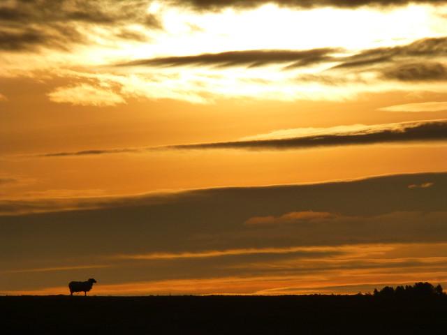 Lone Sheep Sunrise..x, Panasonic DMC-TZ30