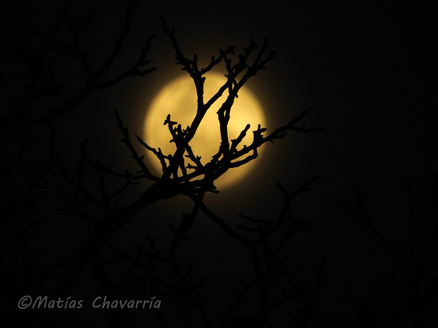 Moon between branches / Luna entre ramas (Explored)