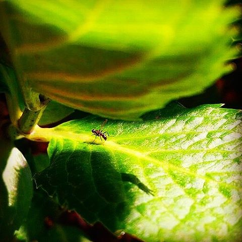 Little intruder #insect #nature #leaves #green #spring #macro #closeup #excellent_nature #excellent_macros #naturelovers #fanpageit #repostcalabria #calabriadaamare #yourartgallery #viewbug #piccoloclubfoto #eyeemoninstagram #asuszenfonego #phototag #foto