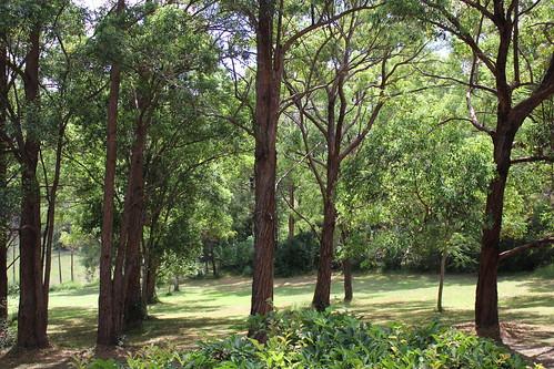 australia nsw travel byabarra trees green