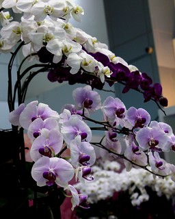 Orchid from Taiwan