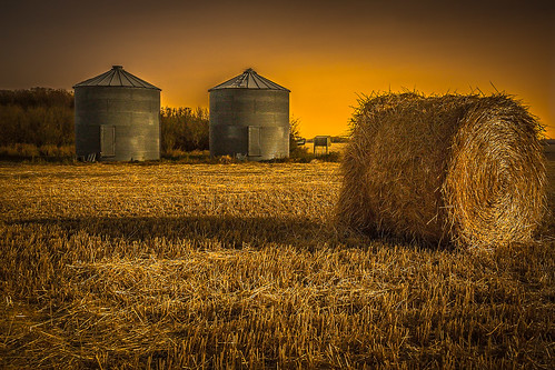 autumn summer sky canada nature field night rural landscape gold golden countryside outdoor farm wheat country grain harvest meadow straw stack bin silo crop round land hay saskatchewan agriculture bale vanscoy