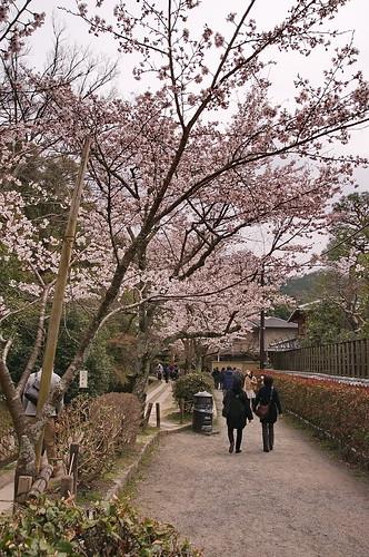 【写真】2013 桜 : 哲学の道/2018-12-24/IMGP9198