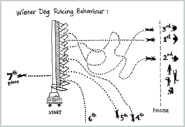 Wiener Dog Racing Behaviour