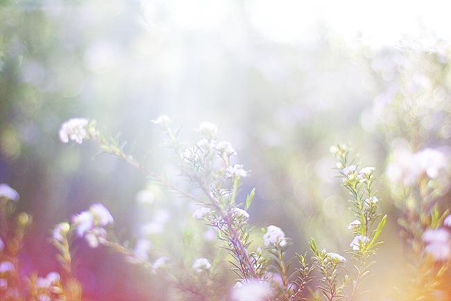 kukkasiaaa