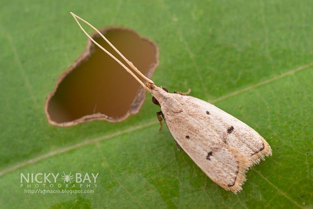 Moth - DSC_3739