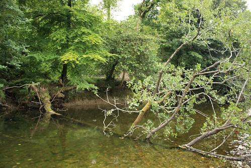 Tenacious fallen tree