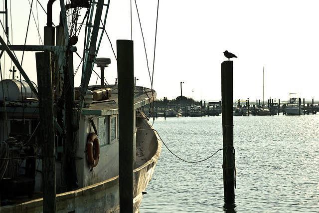 Chincoteague-25