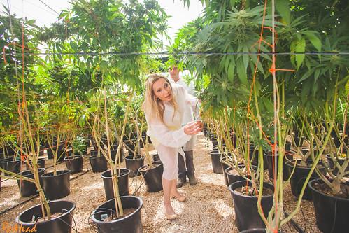 Israel Tikun Olam Medical Marijuana Cheryl Shuman Aimee Shuman Beverly Hills Cannabis Club 5065 by CherylShumanInc