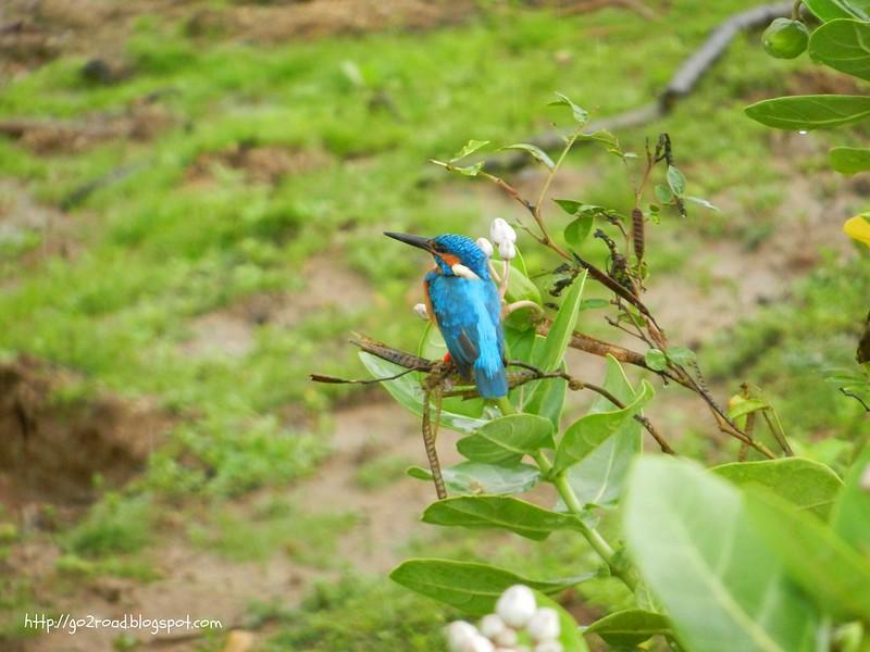 Птицы Яллы. Шри Ланка