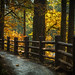 Golden Path by Jeff Carlson