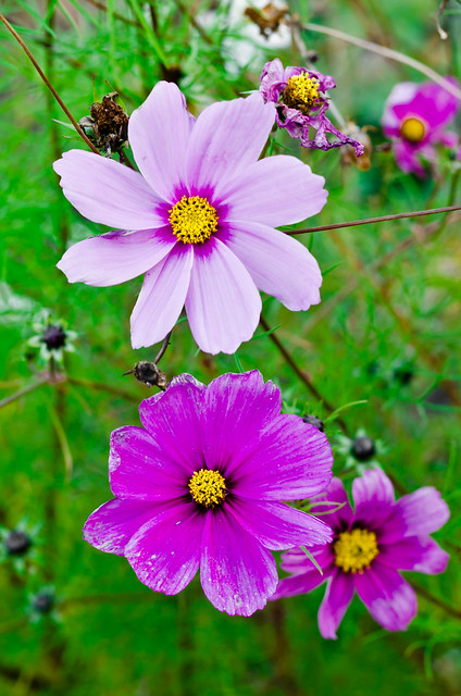 November Flowers Flickr Photo Sharing