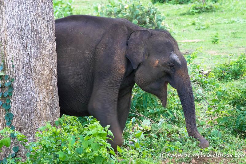 yala national park safari animals