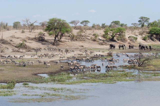 Cebras y elefantes en los Salares de Makgadikgadi, Botsuana