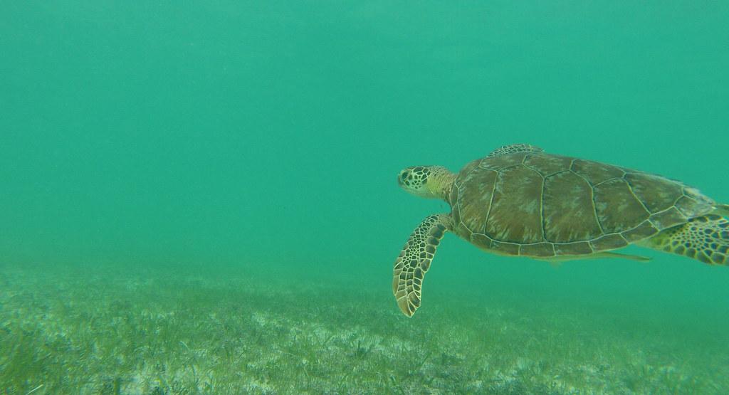 Yucatan trip photos from snorkling 11975942213_b74e1504aa_b