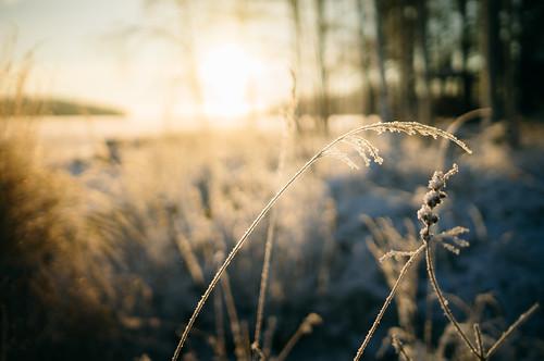 winter suomi finland landscape sony talvi jyväskylä maisema nex6 carlzeisstsonnare24mmf18za