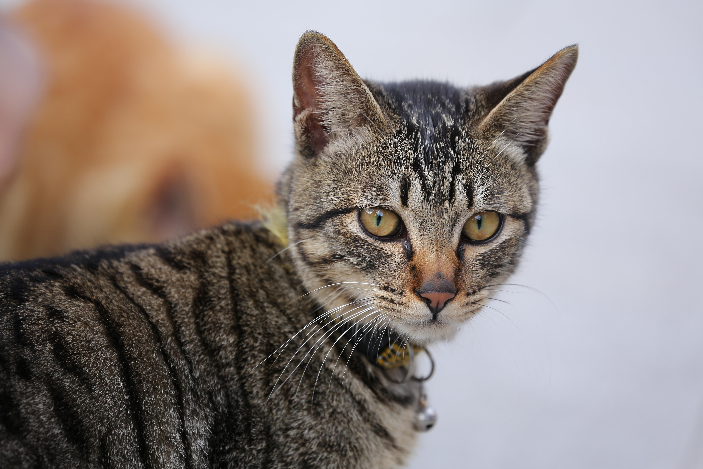壁纸 动物 猫 猫咪 小猫 桌面 5760_3840