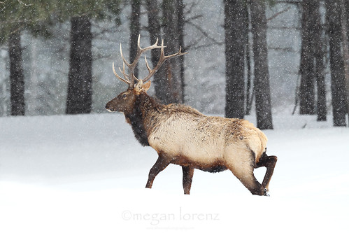 Braving The Winter by Megan Lorenz