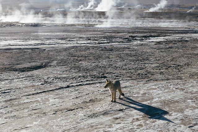 San Pedro de Atacama-5