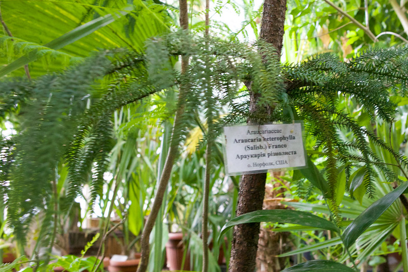 Botanic garden. Lviv, Ukraine