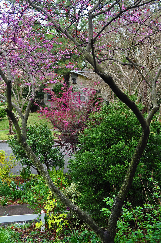 Porch View with Redbud