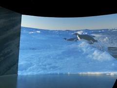 Lyon musée des Confluences, exposition Antarctica