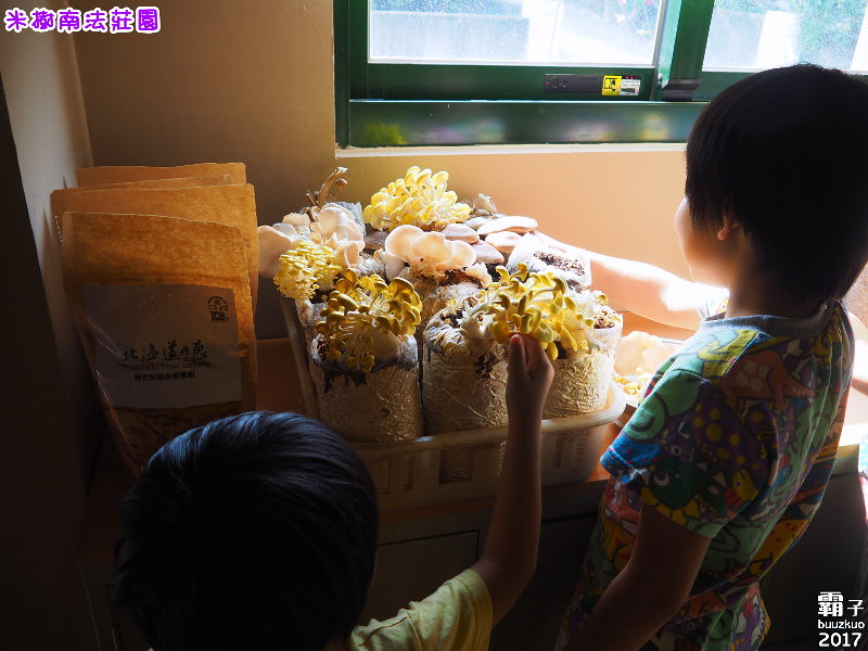 33389942194 1dabd1e076 b - 【熱血採訪】米樹南法莊園,小莊園內可享用美食還有DIY實作體驗~(已歇業)