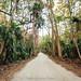 Bulow Road by J. Parker Natural Florida Photographer