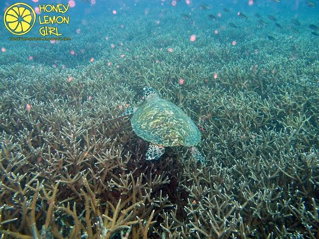 5D4N_Tioman Island_Diving-023