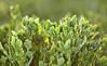 Pflanze, grün, im Gegenlicht