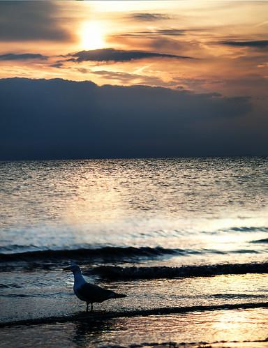 sunset sea seascape beach clouds landscape seaside waves seagull 365 nikon85mmf18