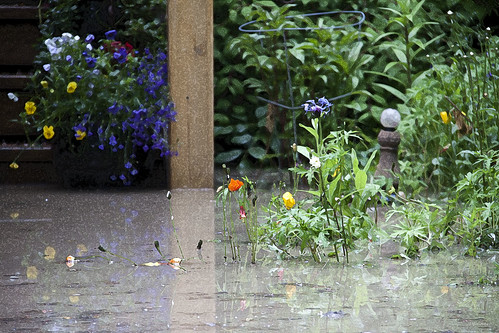 Calgary Flood 2013 - Day 2: soggy flowers by Wanderfull1