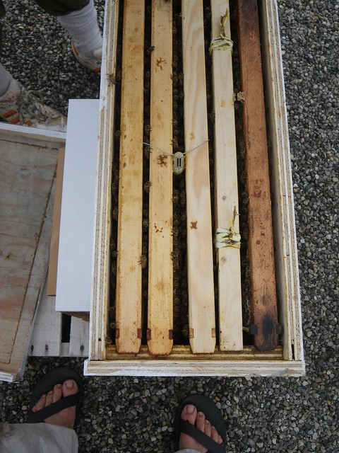4 frame nuc for the sky hive + the warré starter frame