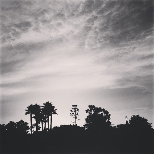 sunset blackandwhite bw tree nature silhouette skyline square orlando florida horizon palm willow squareformat avalonpark fav10 iphoneography instagramapp