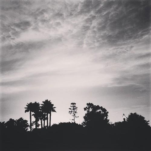 sunset blackandwhite bw tree nature silhouette skyline square orlando florida horizon palm willow squareformat avalonpark fav10 iphoneography instagramapp