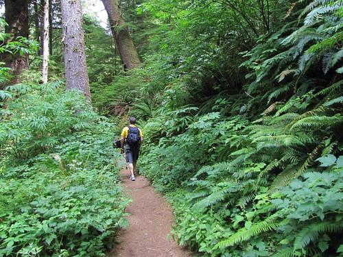 ferny trail