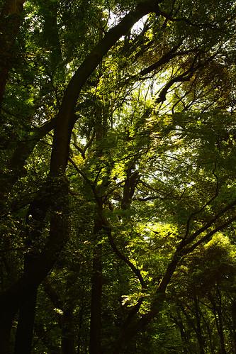 明治神宮の森 by leicadaisuki