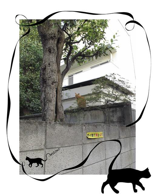 『catzElysium〜古アパートの猫』の画像