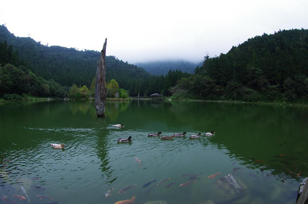 寒流中的北橫明池隨手拍